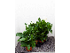Galerij Kamerplanten_37
